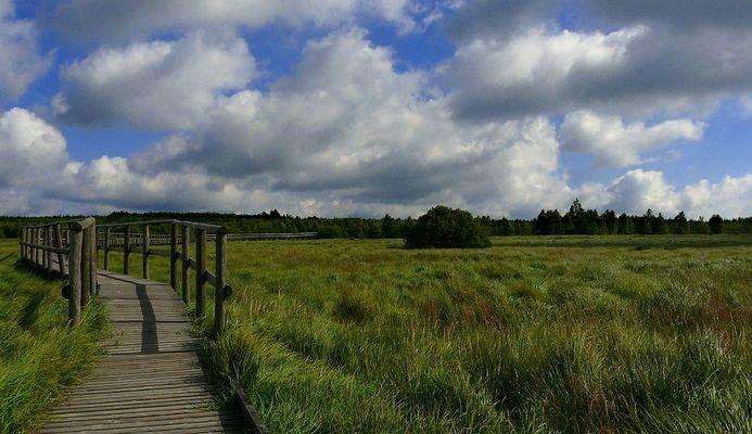 Swamp hike (27)
