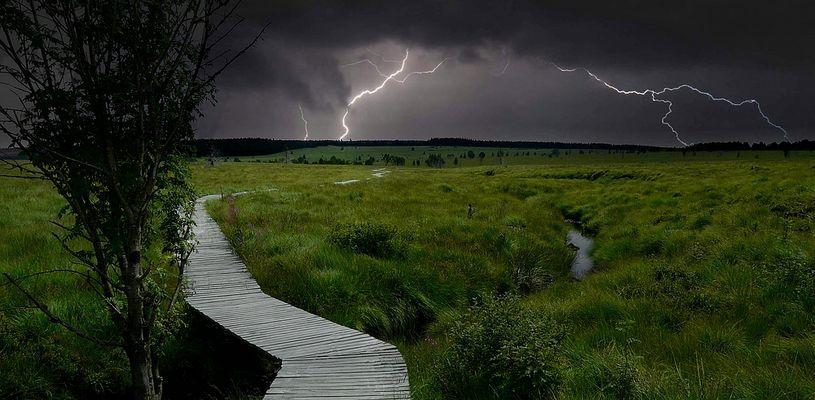 Swamp hike (31)
