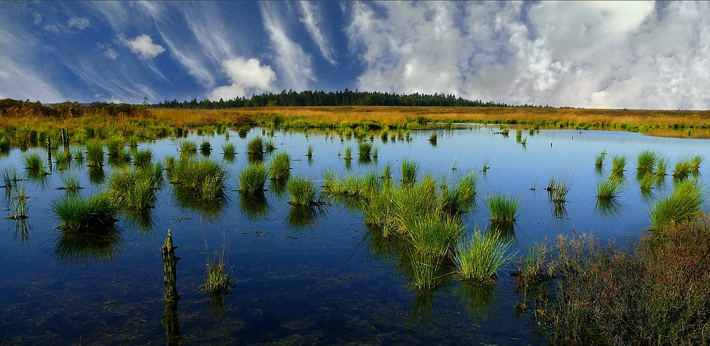 Swamp hike (35) : Brackvenn