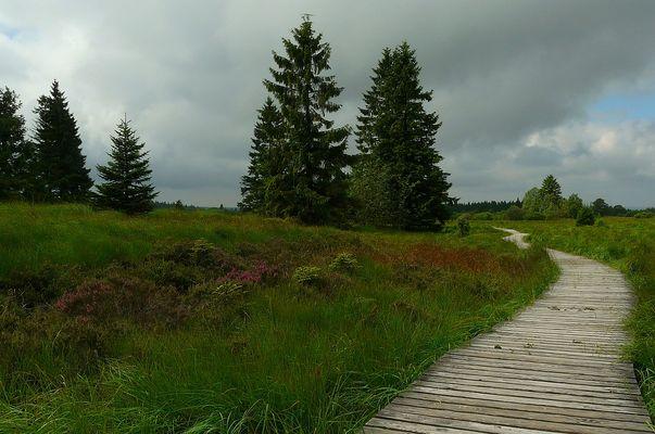 Swamp hike (8)