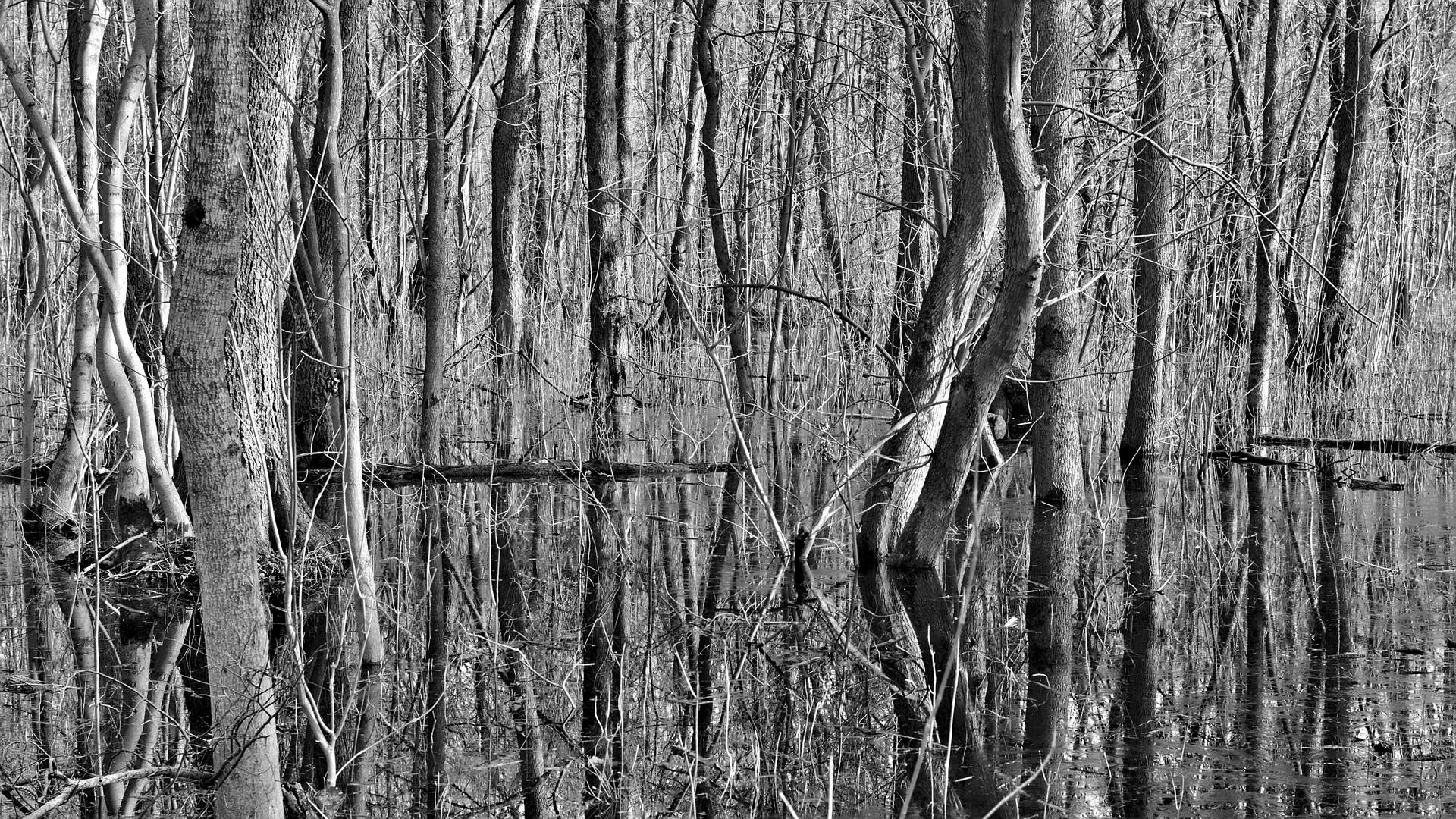 swamp / Moor