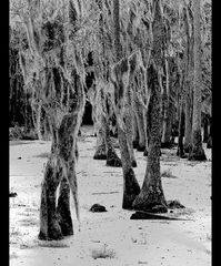 ... swamps # 2 ...