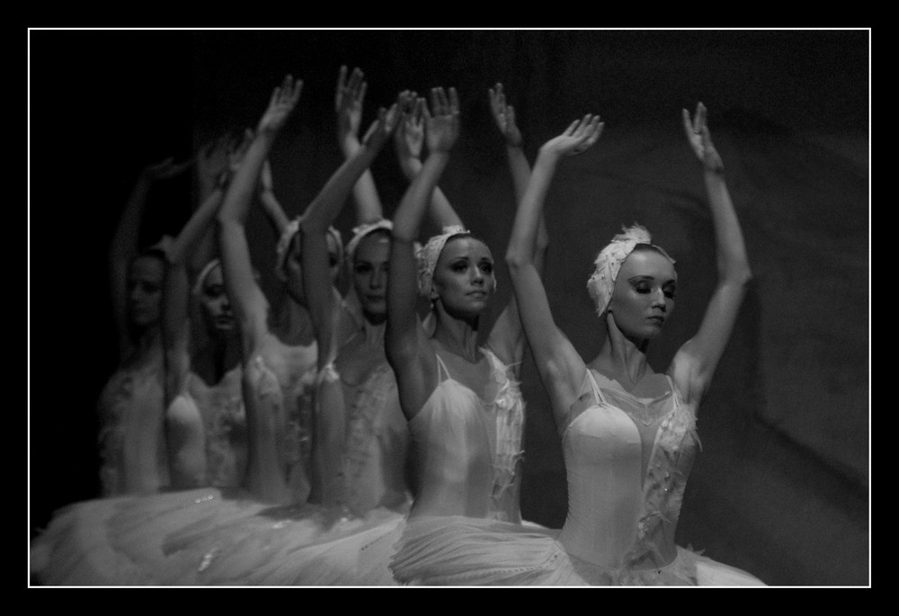 swan Lake Ballet II