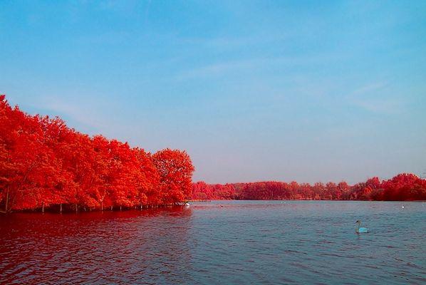 Swan Lake (IR Bi-Color)