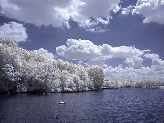 Swan Lake (IR Channel Shift)