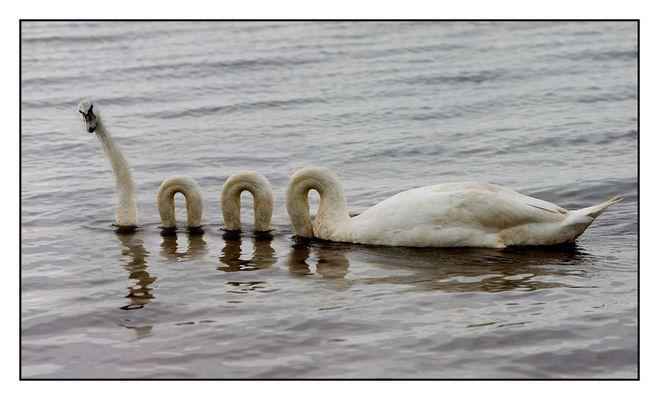 Swan Mutation
