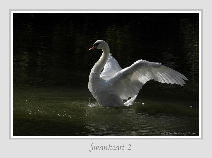 Swanheart II