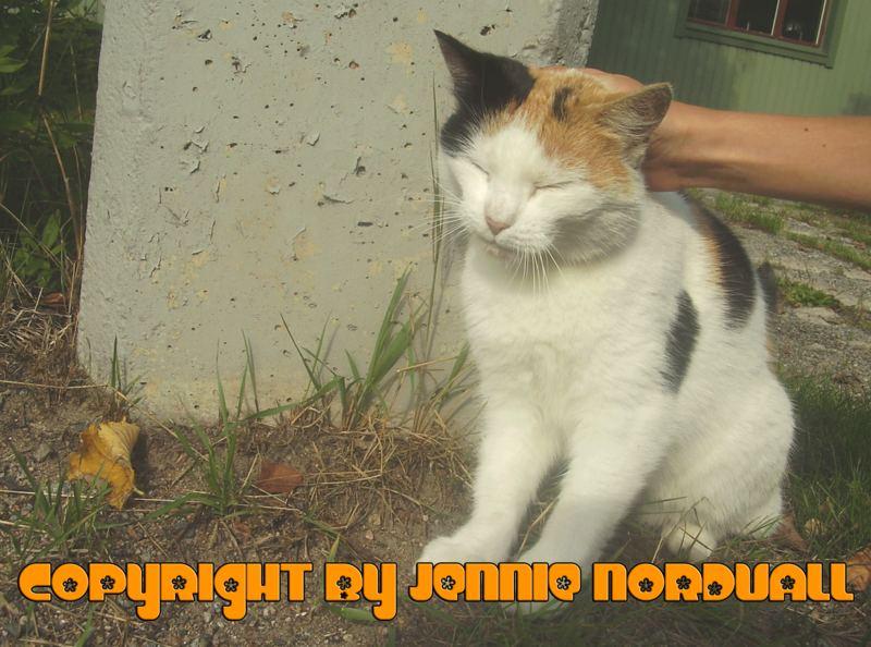 » SWEET CAT.
