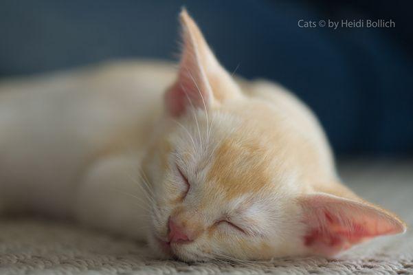 Sweet Dreams / 7