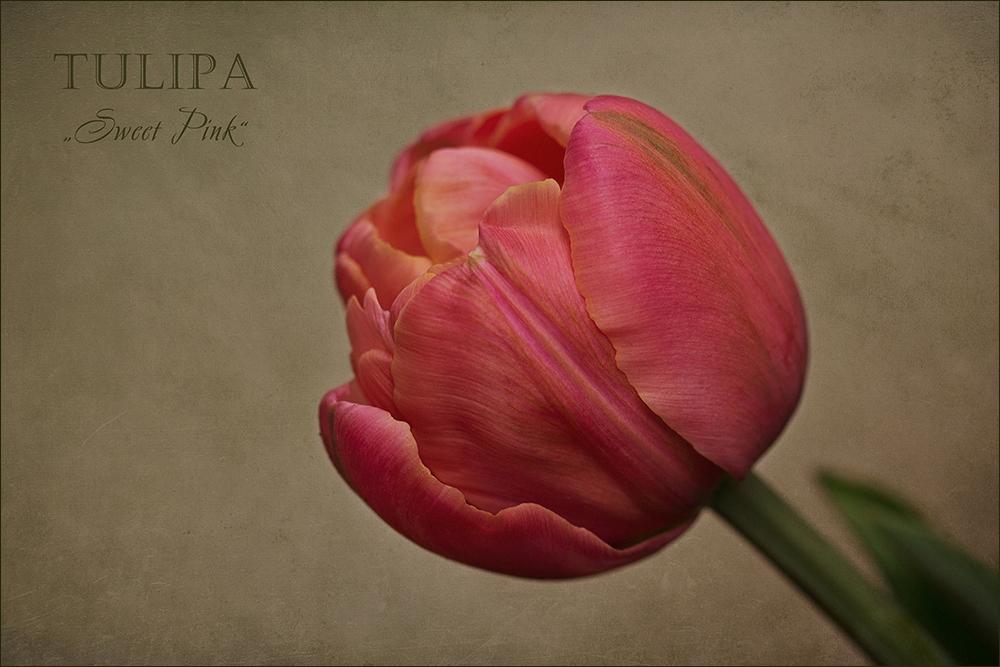 Sweet Pink....