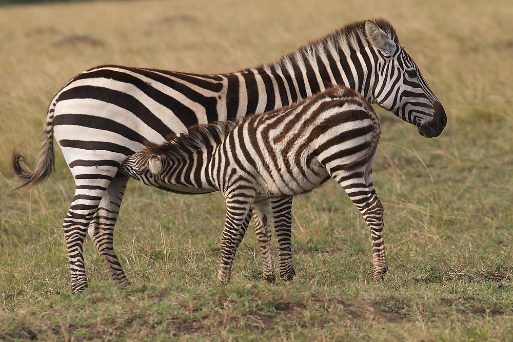 Sweetwaters Reservat / Kenya -1-
