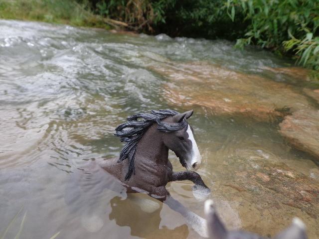 swimming Shire