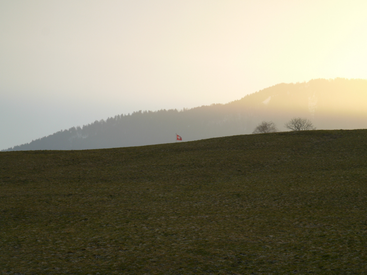 Swiss Field in the Morning / Schweizerisches Feld am Morgen