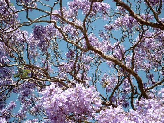 Sydney im Frühling