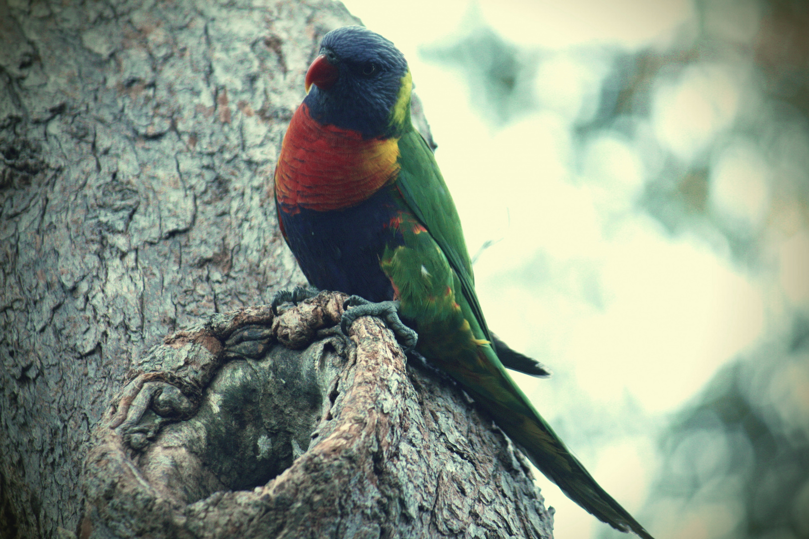 Sydney Parrot