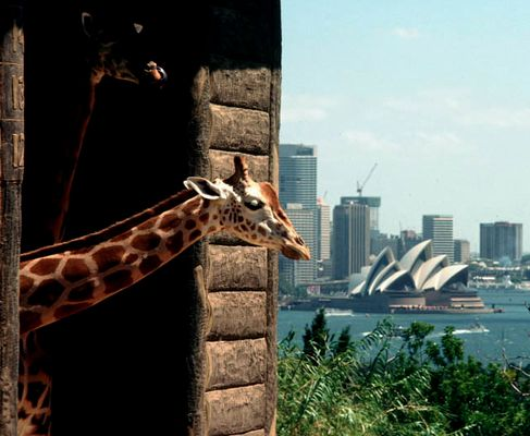 sydney zoo and opera house