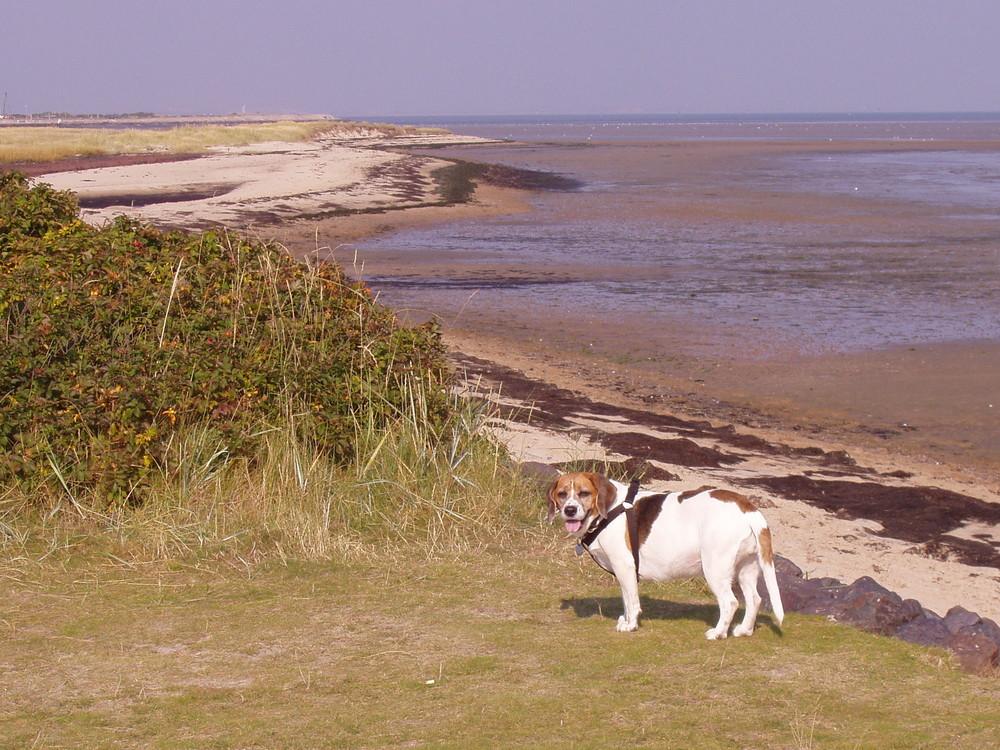 Sylt, auf der Watt-Seite der Insel bei Keitum
