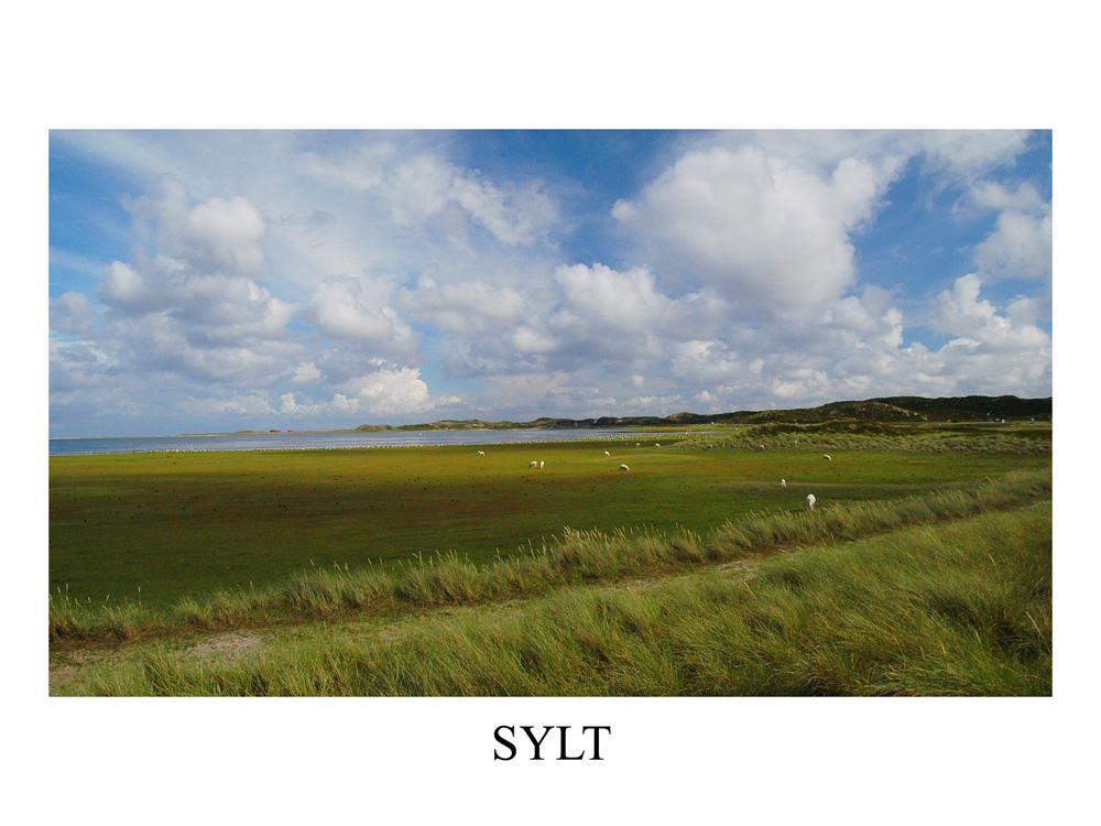 Sylt - Ellenbogen