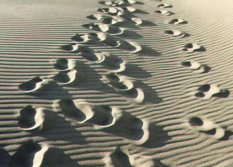 Sylt, in den Dünen
