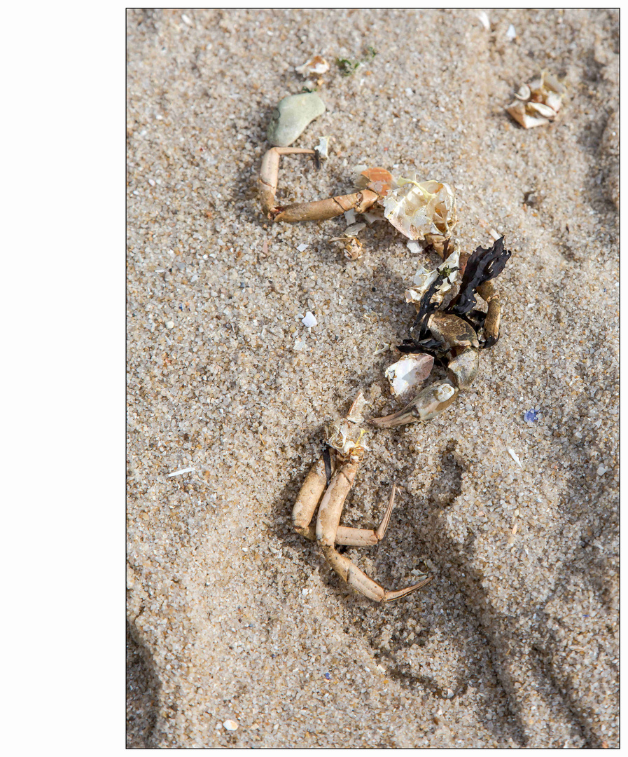 Sylt, - Reste am Strand