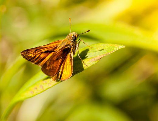 sylvaine non pas ma soeur le papillon