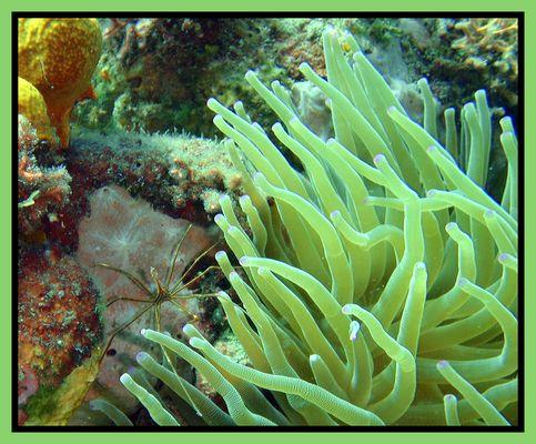Symbiose sous marine...