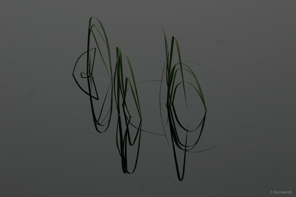 Symétrie dans l'eau