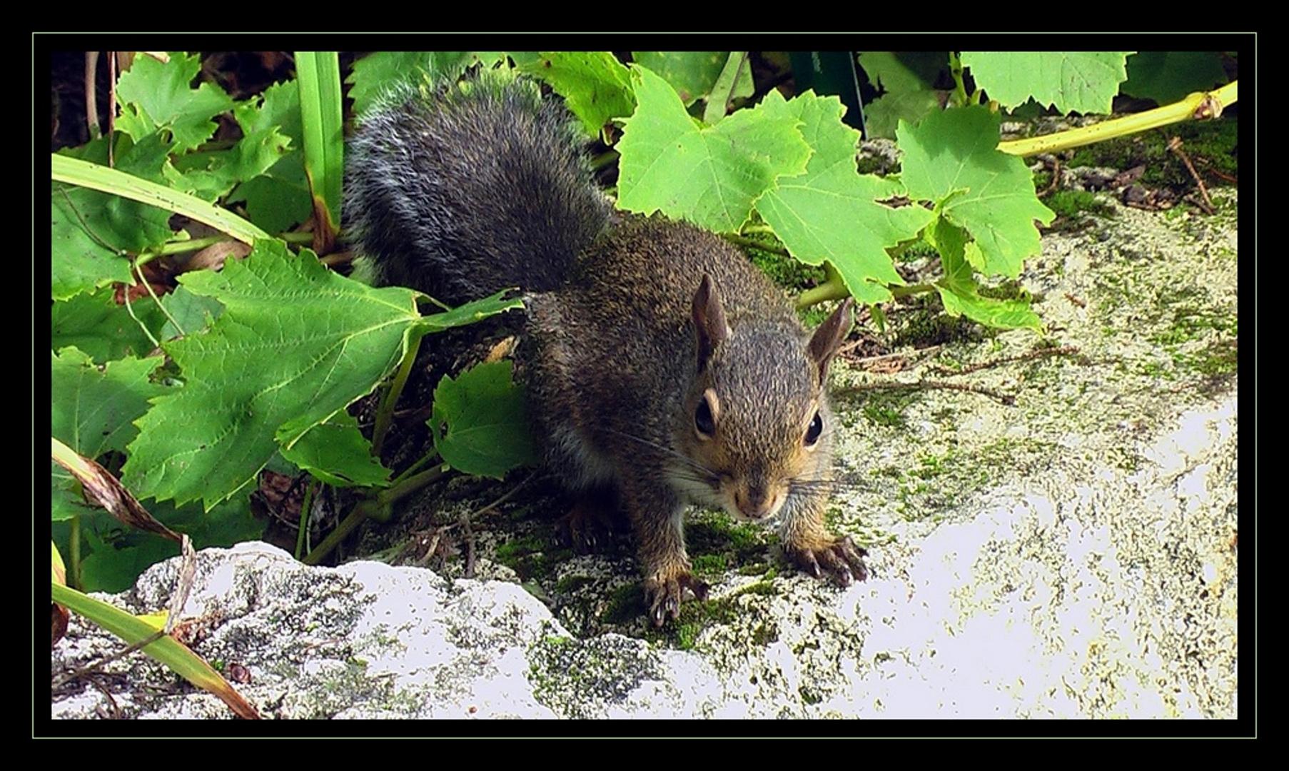 sympa l'écureuil !