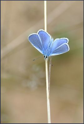 Sympa petit bleu...