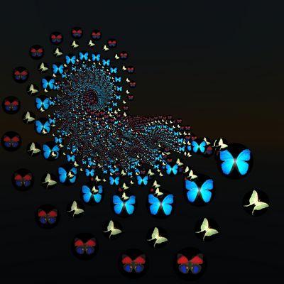 symphonie des papillons