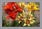 """"""" symphonie florale """""""