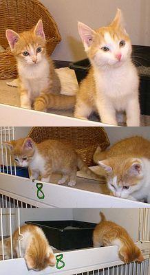 synchroner Katzentanz