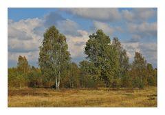 Syrauer Heide im Herbst - 1