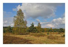 Syrauer Heide im Herbst - 2