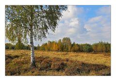 Syrauer Heide im Herbst - 3