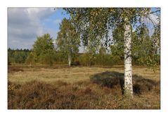 Syrauer Heide im Herbst - 5