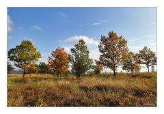 Syrauer Heide im Herbst - 6