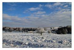Syrauer Heide - Winterimpression 3