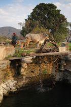 Système d'irrigation, sur la route de Kumbhalgarh, Rajasthan