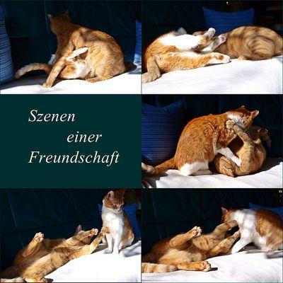 Szenen einer Freundschaft 2