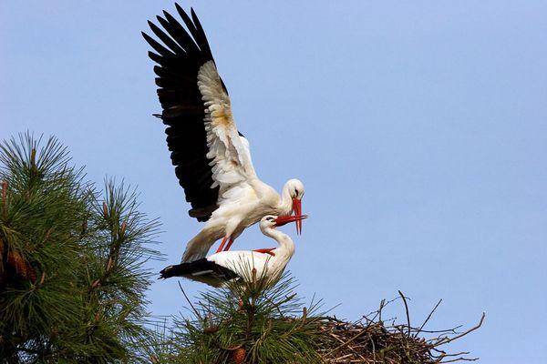 Szenen einer Storchen-Ehe 2