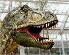 T Rex im NWZ