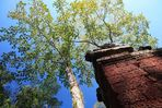 : Ta Prohm - Angkor 2 :