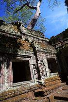 : Ta Prohm - Angkor :