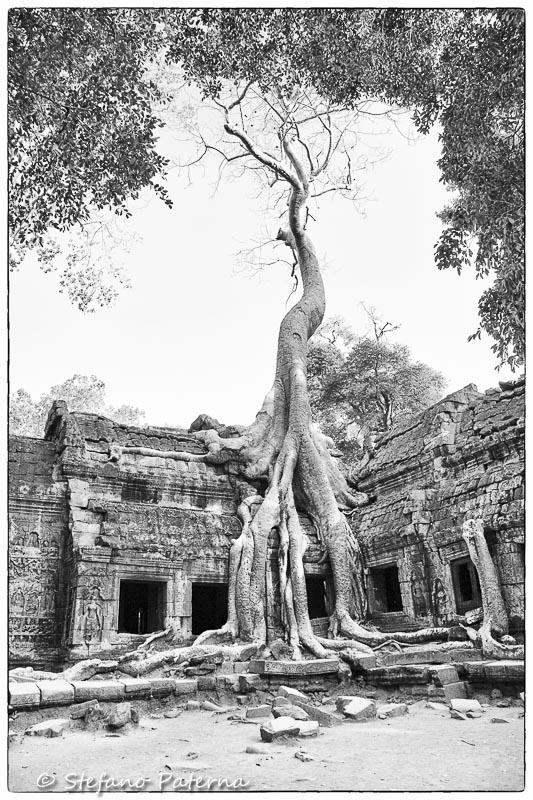Ta Prohm Tempel, Angkor