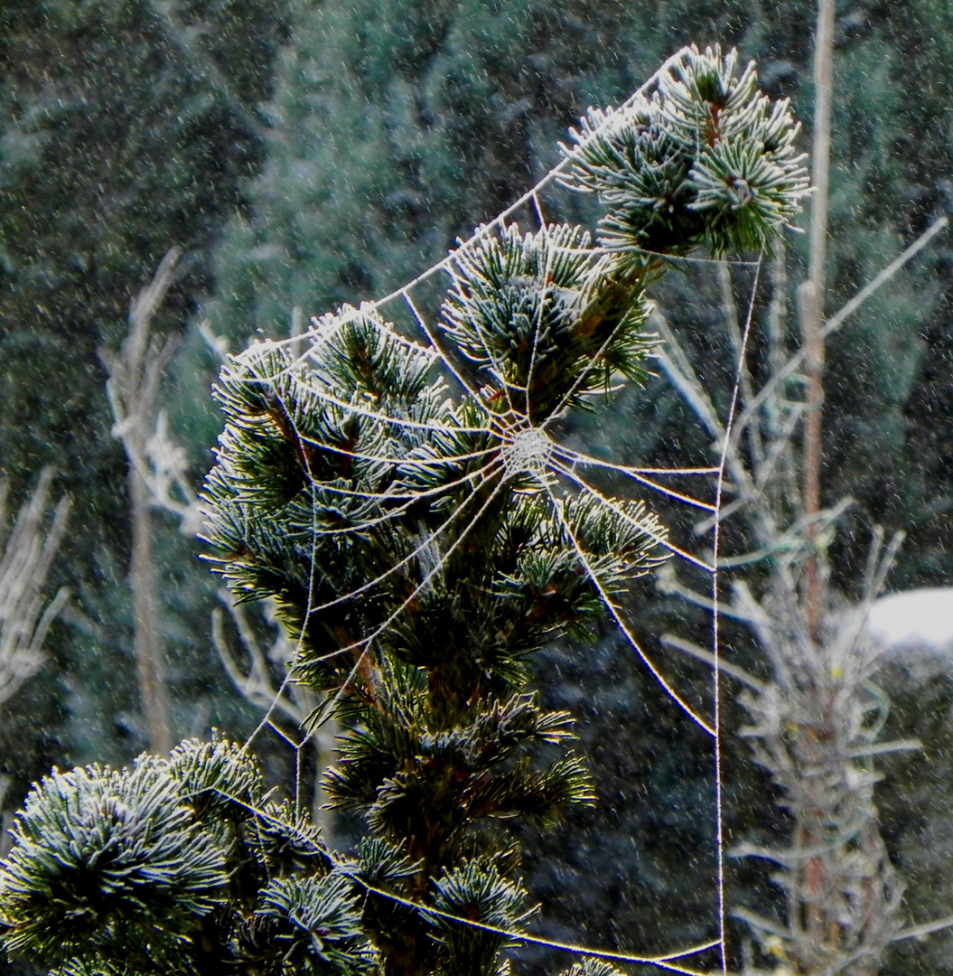Tableau hivernale