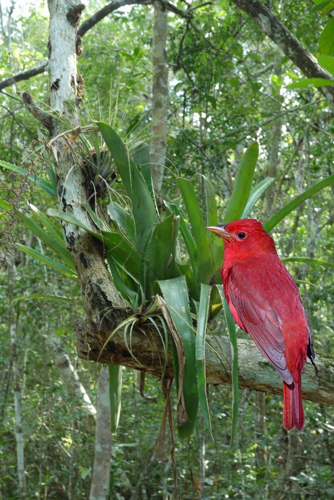 tache rouge dans la jungle
