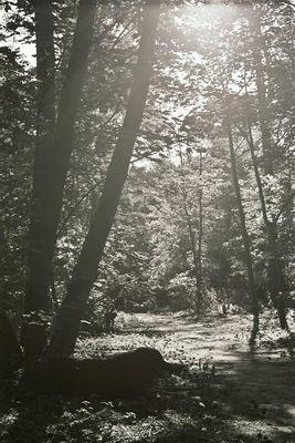 Täglich Gassi gehen im Wald....