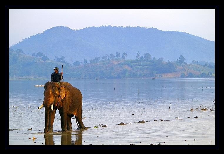 Tägliches Elefantenbad