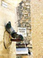 Täubchen haben Durst ,in der Provence .